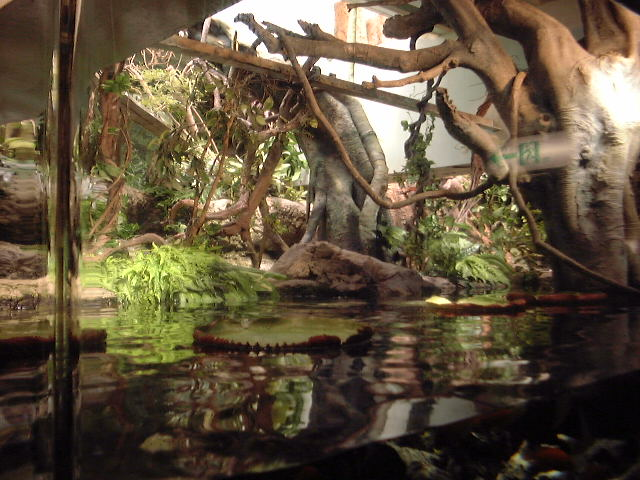 aquarium sia